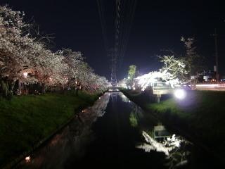 09sakura2